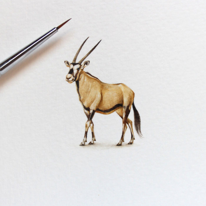 Сахарский антилопа. Автор: Julia Las.