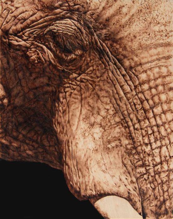 Слон. Автор: Julie Bender.