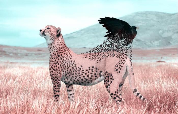 Фантастические животные французского художника Julien Tabet.