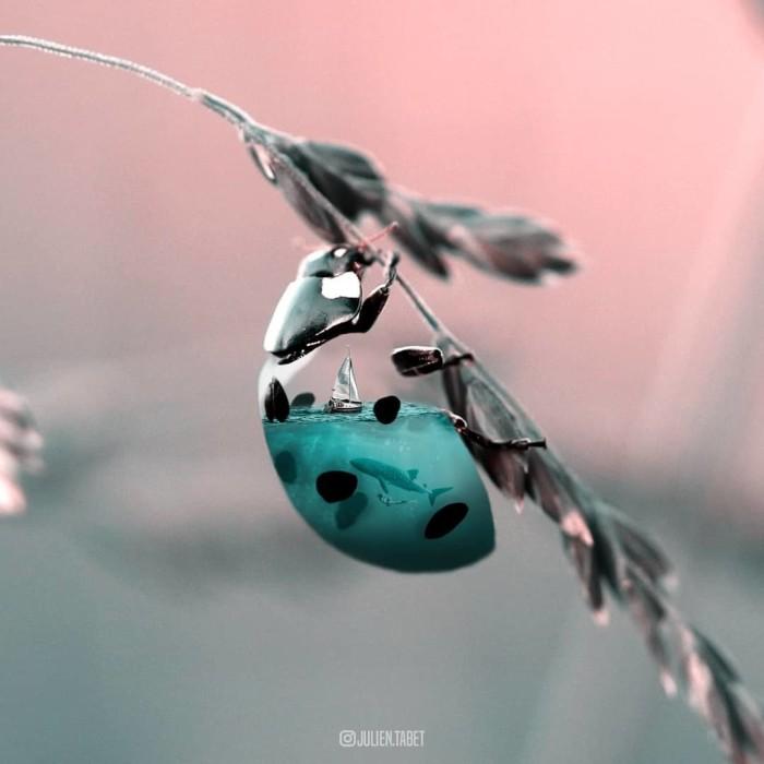 Одинокий парусник. Автор: Julien Tabet.