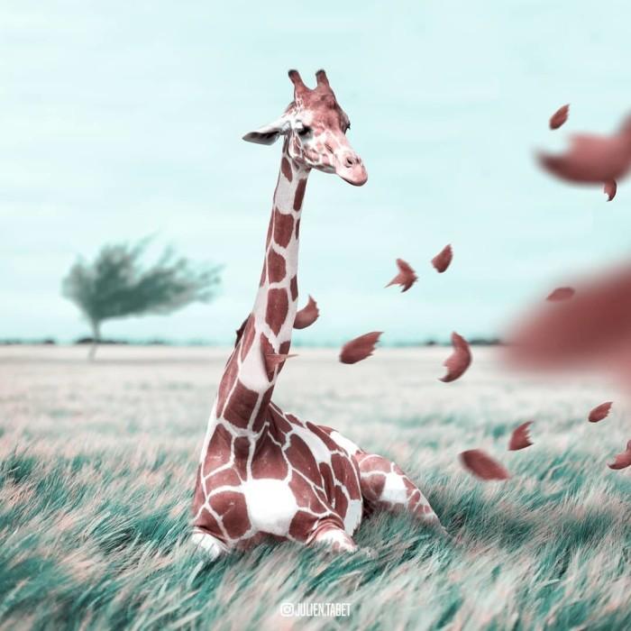 Жираф. Автор: Julien Tabet.