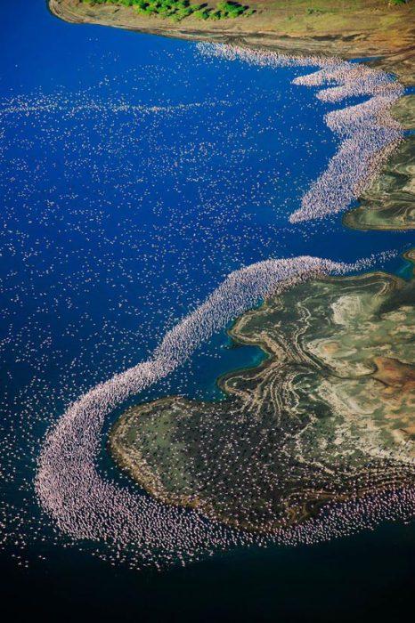 Воды озера надежно защищают фламинго от хищников во время высиживания яиц.