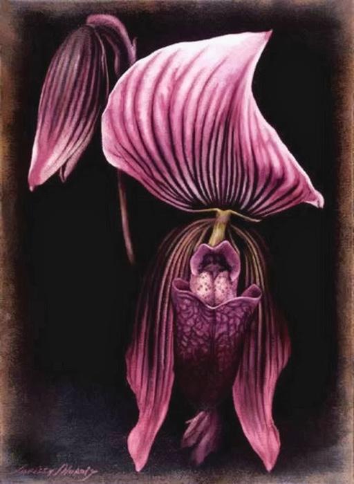 Хищные орхидеи. Автор: Лариса Морейс.