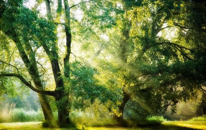 Утреннее великолепие. Роскошные лесные пейзажи голландского фотографа Ларса ван де Гура (Lars van de Goor).