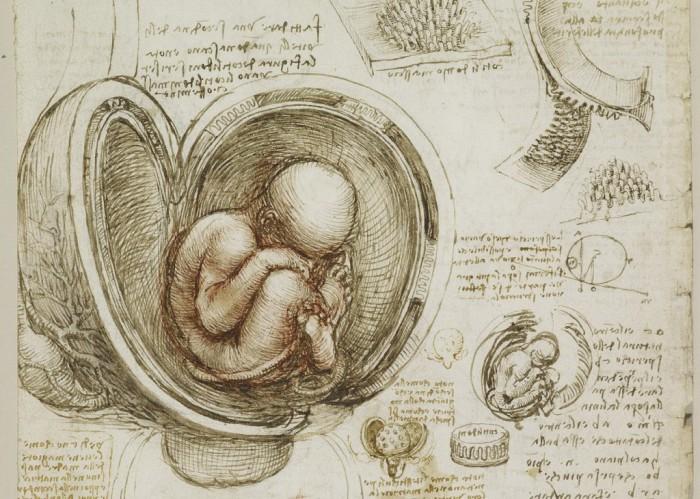 Анатомические рисунки Леонардо да Винчи.