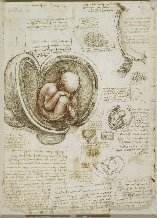 Анатомические наброски Леонардо да Винчи.