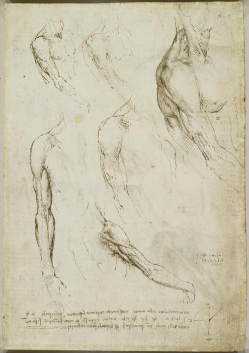 Научные труды по изучению анатомии.  Леонардо да Винчи.
