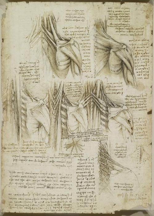 Ему удалось не просто изучить строение человеческого тела, но и использовать эти познания в своих художественных работах. Анатомические рисунки Леонардо да Винчи.