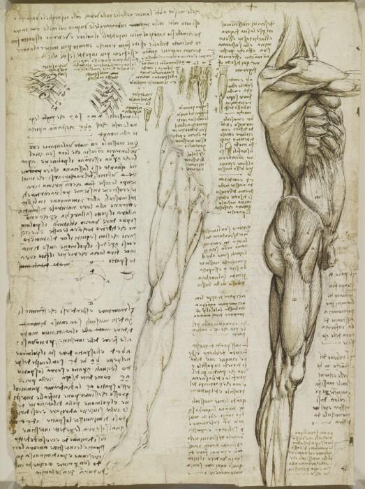 Спустя четыреста лет, эти записи и эскизы были оцифрованы и выставлены на всеобщее обозрение. Анатомические рисунки Леонардо да Винчи.