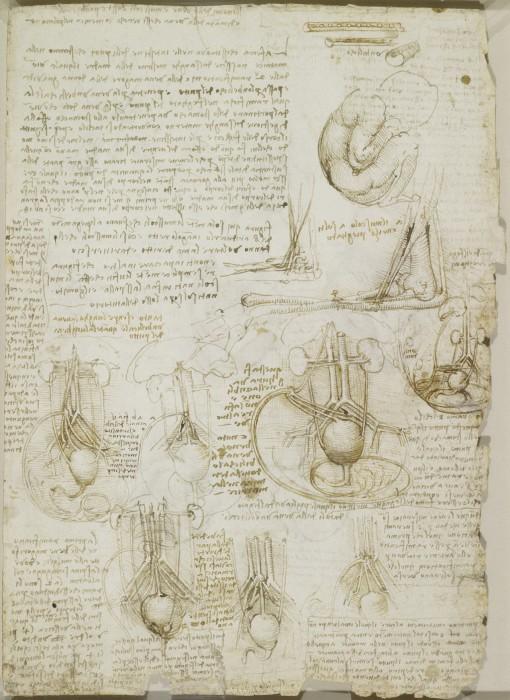 Свои анатомические рисунки Леонардо да Винчи всегда сопровождал подробными комментариями.