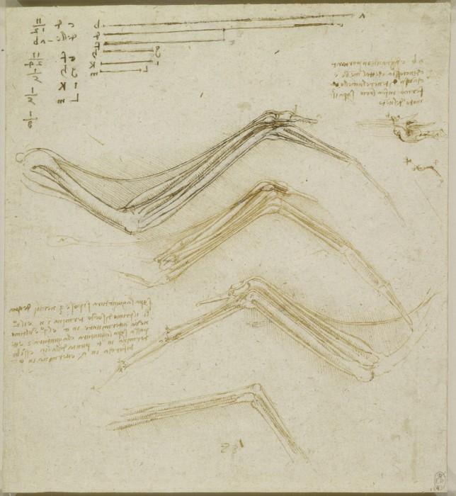 Анатомические эскизы Леонардо да Винчи.