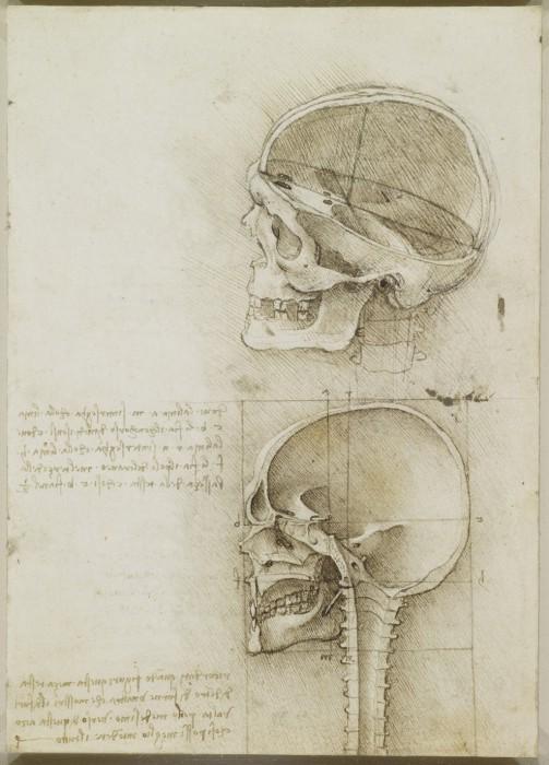 Анатомия в эскизах  Леонардо да Винчи.
