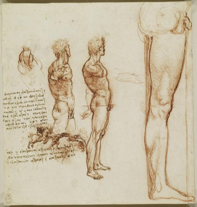 Научные труды гения. Анатомические рисунки Леонардо да Винчи.