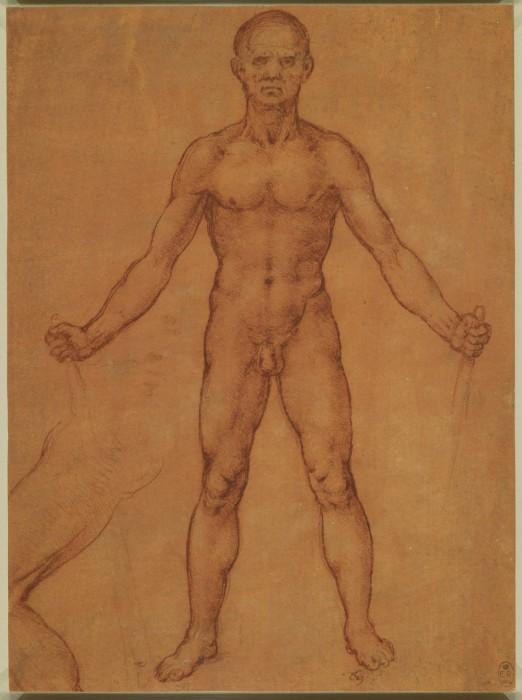 Анатомические пристрастия Леонардо да Винчи.