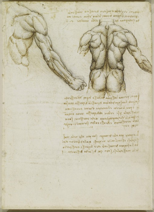 Изучение анатомии. Анатомические рисунки Леонардо да Винчи.