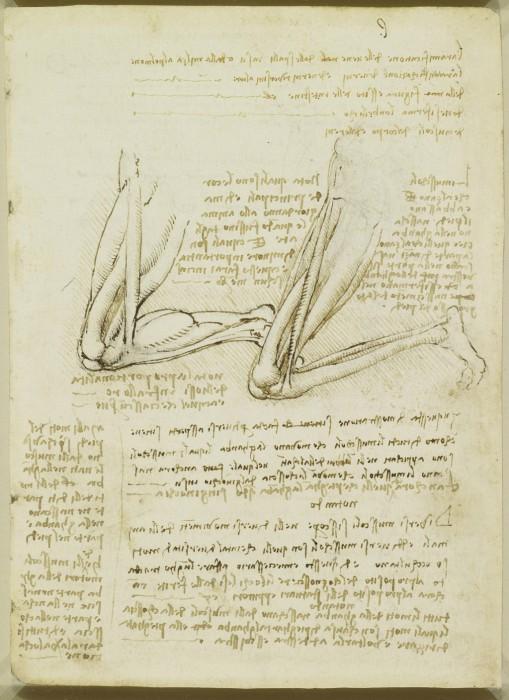 Леонардо да Винчи питал особое пристрастие к анатомии.