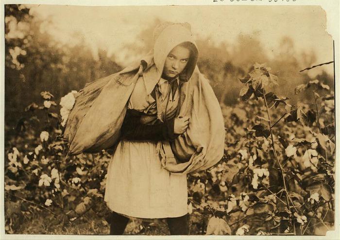 11-летняя Келли Кэмпбелл собирает хлопок. Автор фото: Льюис Хайн (Lewis Hine).