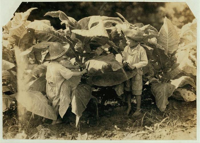 Шестилетний Амос и четырёхлетний Гораций в табачном поле. Автор фото: Льюис Хайн (Lewis Hine).