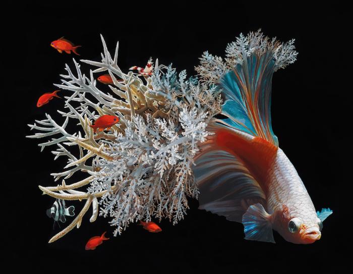 Волшебный мир акриловых рыбок. Автор: Lisa Ericson.