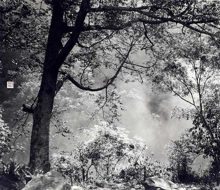 Возрождение весны, 1956 год. Автор: Long Chingsan.
