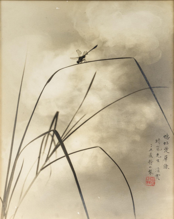 Цикада на траве. Автор: Long Chingsan.