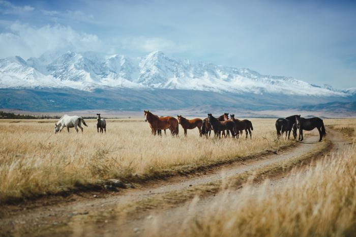 Чтобы скрыть следы захоронения, верные люди великого хана выпустили тысячи лошадей. \ Фото: blog.naver.com.