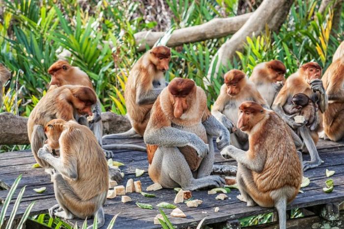 Обезьяны на острове Лангкави. Малайзия.