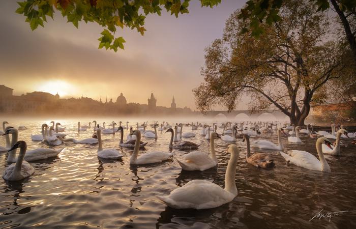 Солнечное утро (Sunny Morning). Автор фото: Марек Киевски (Marek Kijevsky).