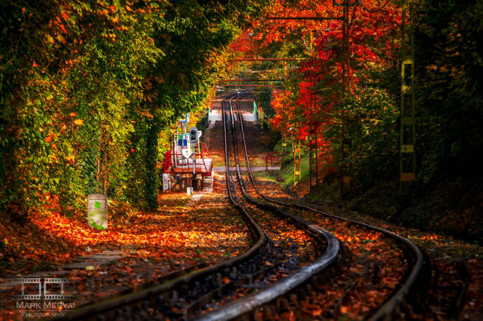 Дорога, ведущая в осень. Автор: Mark Mervai.