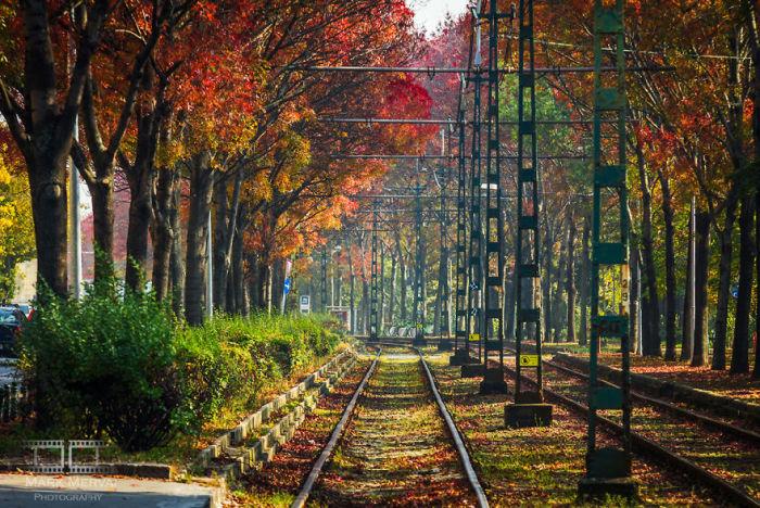 Осенний путь. Автор: Mark Mervai.