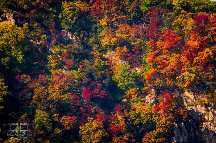 Всі фарби осені. Автор: Mark Mervai.