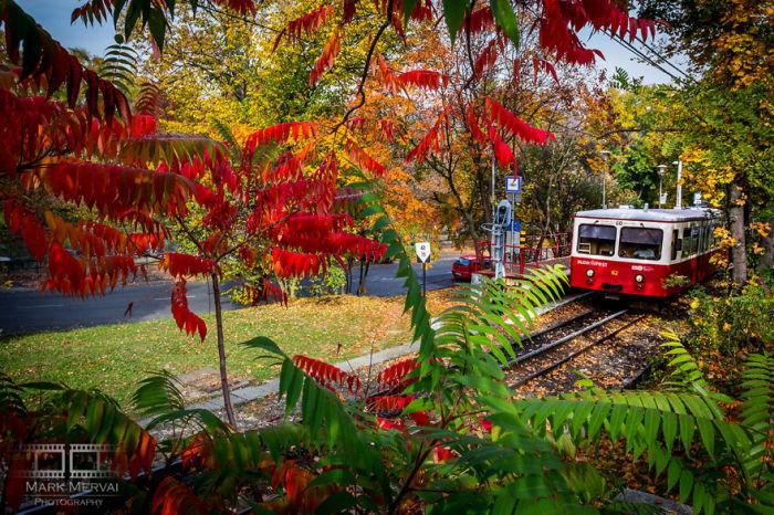 Разноцветные листья. Автор: Mark Mervai.