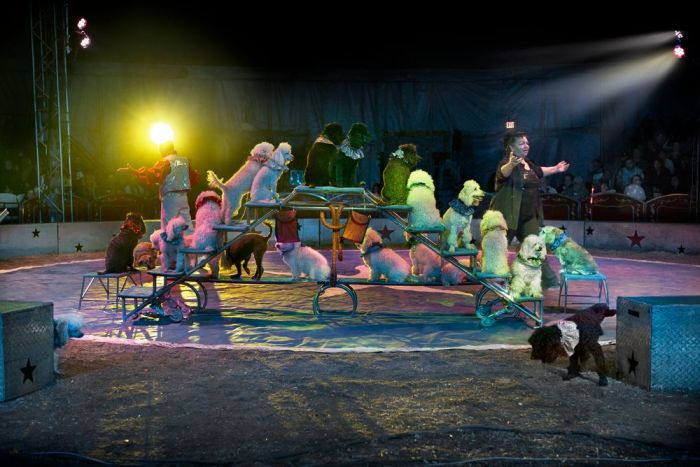 Под куполом цирка. Автор: Markku Lahdesmaki.