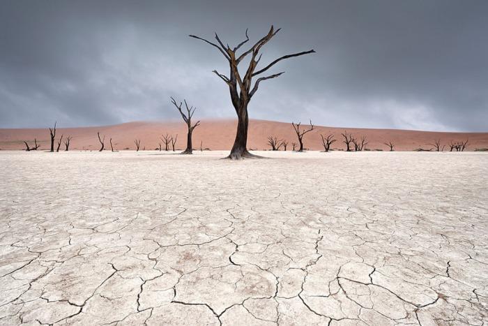 Deadvlei, что означает мёртвое болото. Оно окружено самыми высокими дюнами в мире. Снимок сделан в Намибии. Автор: Marsel van Oosten.