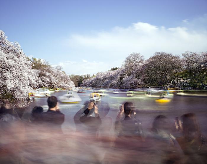 Ханами - любование цветами, Парк Иконашира (Hanami №14, Inokashira Park), суббота, 5 апреля 2014 г. Автор фото: Matthew Pillsbury.