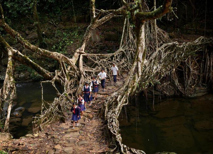 Ученики школы идут по мосту из каучукового дерева. Мегхалая, Индия.