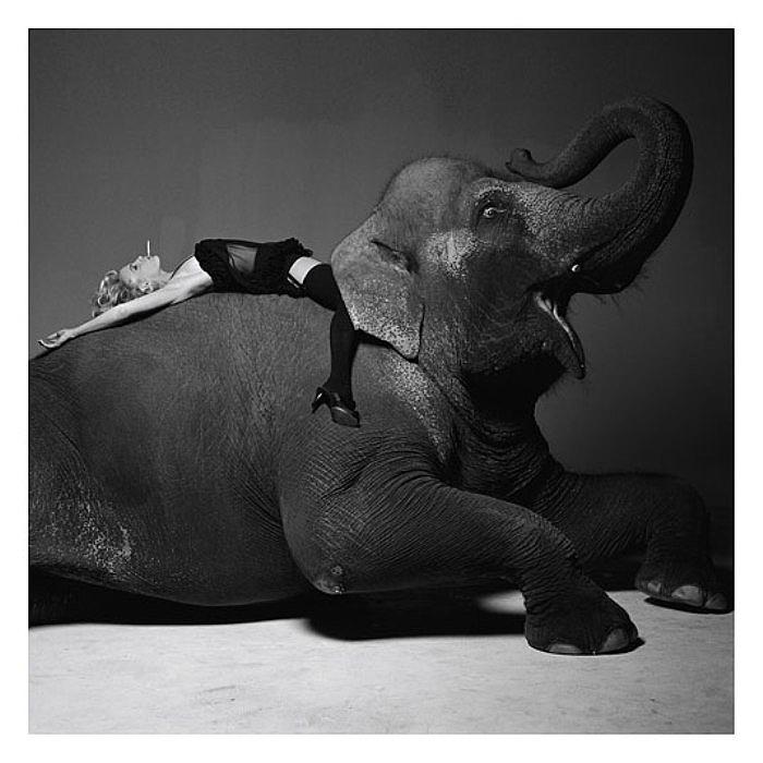 Верхом на слоне. Потрясающе чувственные портреты. Автор фото: Michel Comte.