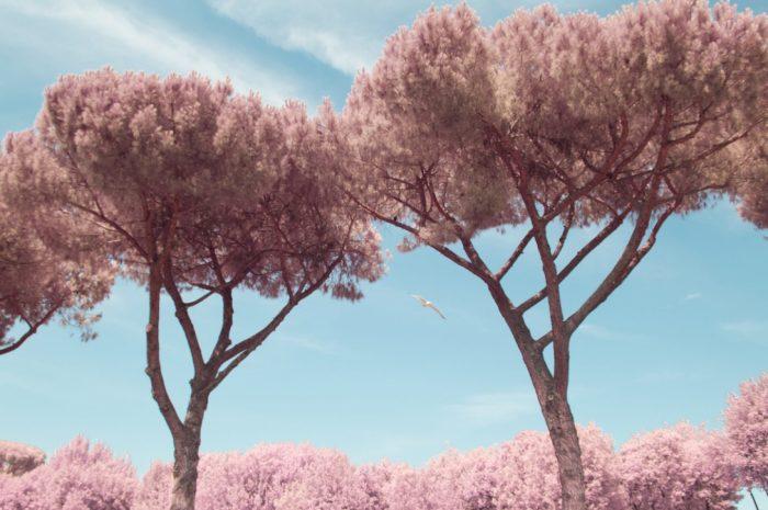 Рим в розовом цвете. Автор: Milan Racmolnar.