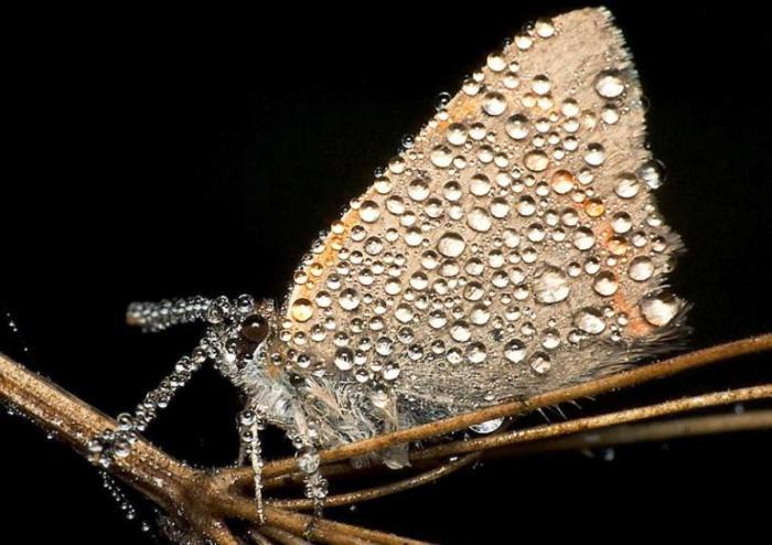 Miroslaw Swietek. Драгоценная бабочка.