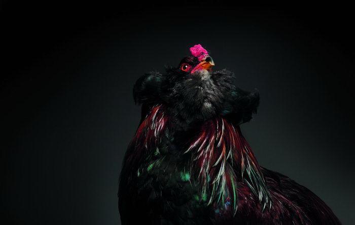 С высоко поднятой головой. Авторы: Moreno Monti и Matteo Tranchellini.