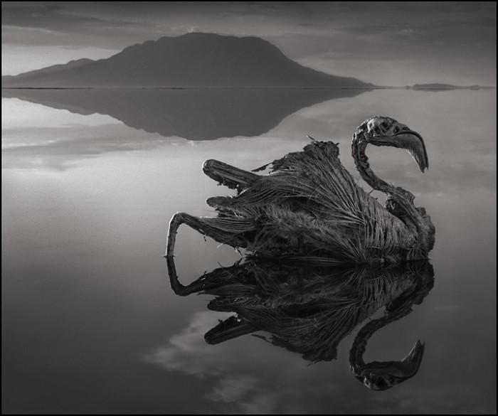 Зловещее озеро Натрон. Автор: Nick Brandt.