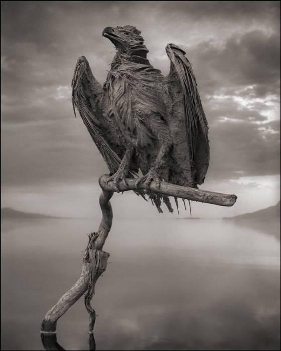 Кальцинированная птица, озеро Натрон. Автор: Nick Brandt.