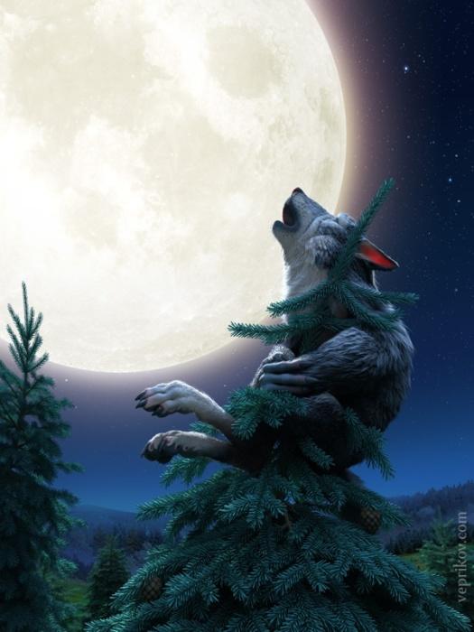 Серый волк. Автор: Никита Веприков.