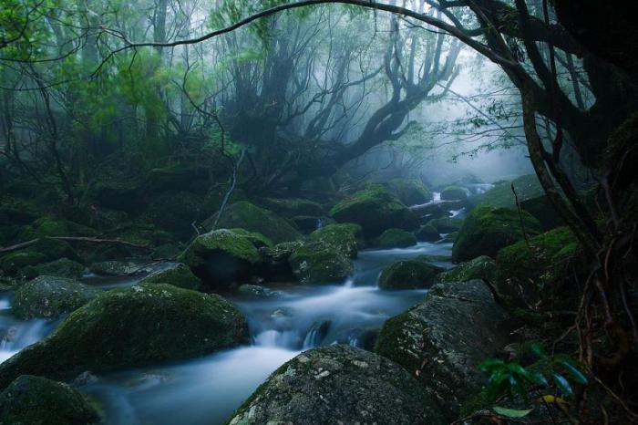 Лесной пейзаж. Якушима.