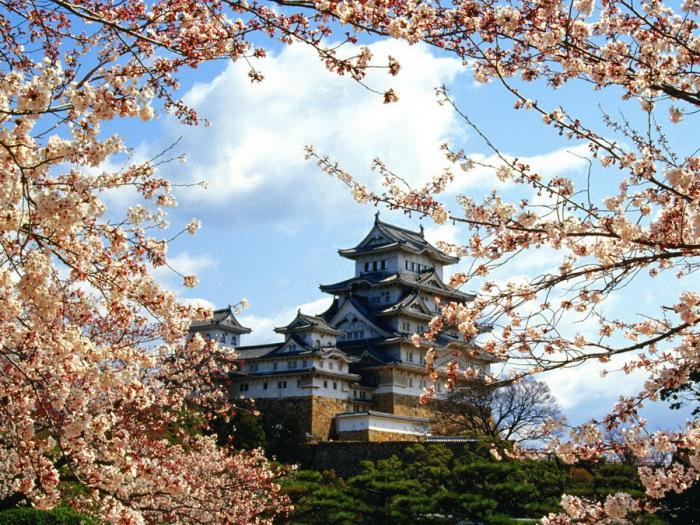 Замок Химедзи в цвете сакуры.