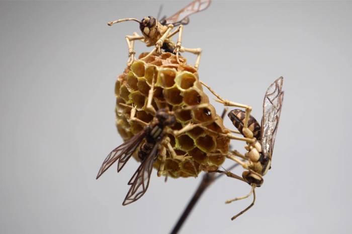 Пчела. Автор: Noriyuki Saitoh.