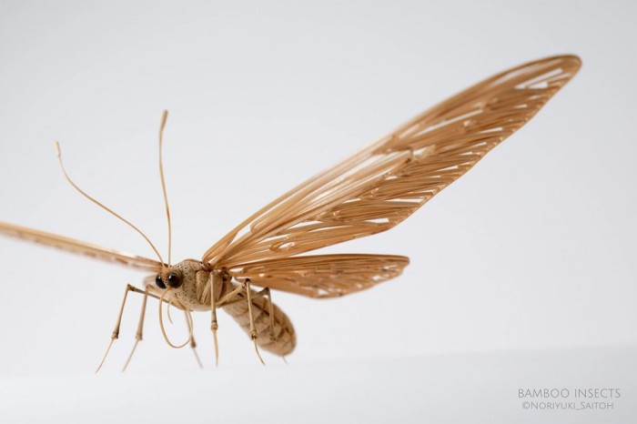 Бамбуковые насекомые. Автор: Noriyuki Saitoh.