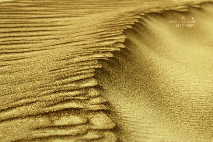 Золотые дюны. Автор фото: Noushad GD.