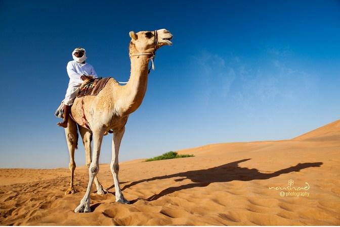 Прогулка на верблюде. Автор фото: Noushad GD.