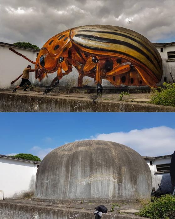 Колорадский жук. Автор: Sergio Odeith.